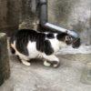 中野の野良猫
